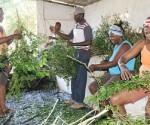 pinar del rio medicinales