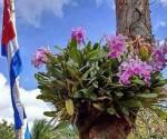 Cuba-orquideas-bandera