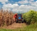Cuba Agricultura Diaz Canel